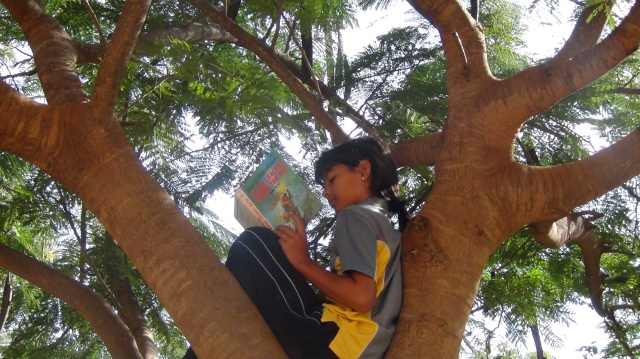 Lyola Legacy Reading Up in Tree 1